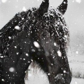 Piroppo im Schnee