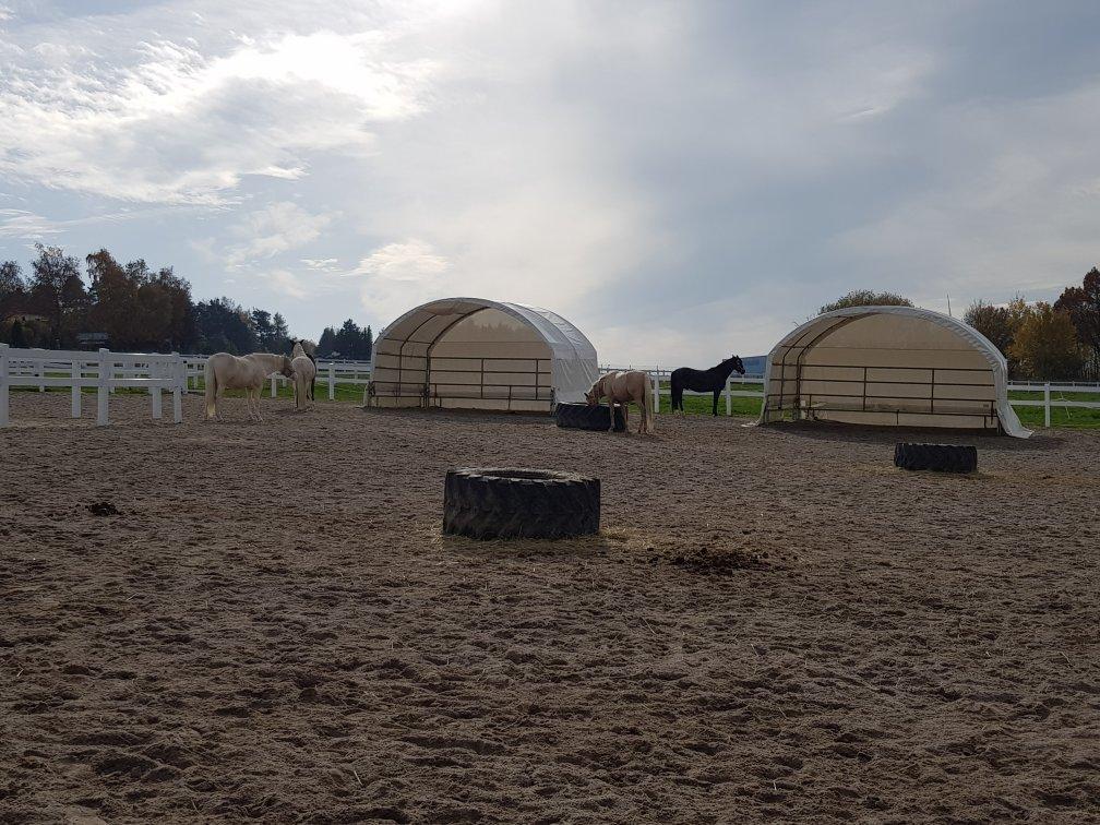 Zelte In Der Herdenkoppel