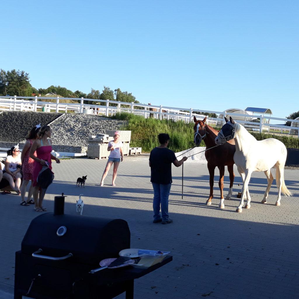 Beachparty – Grill Und Pferde